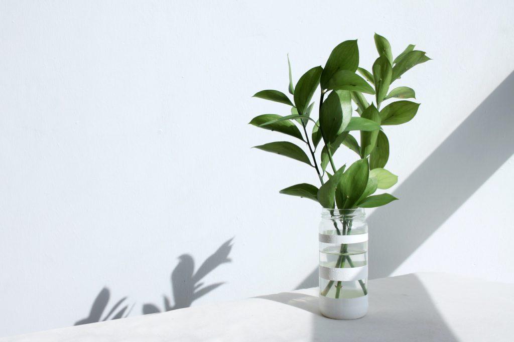 vaso de planta em uma mesa branca ilustrando os benefícios das plantas