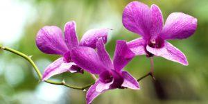 orquídeas lilás para simbolizar uma floreira vertical para orquídeas