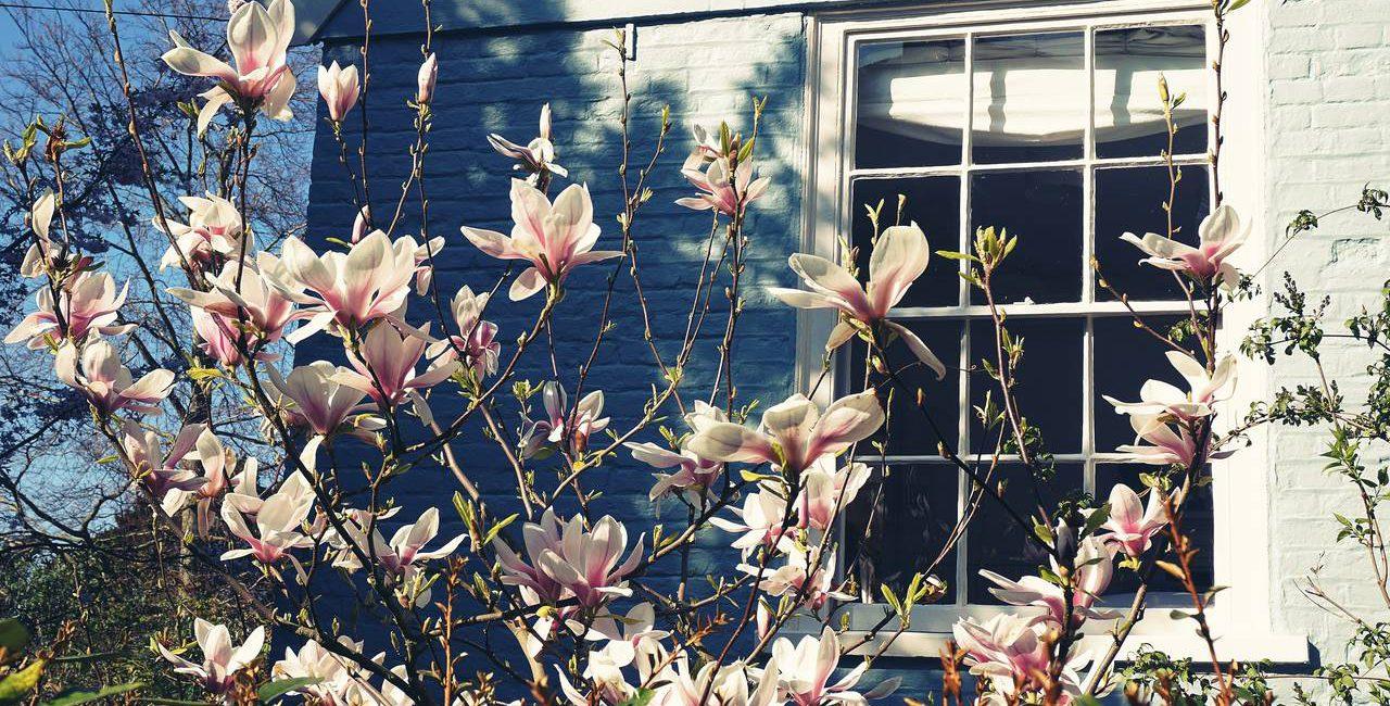 arvores ornamentais em frente a janela de uma casa